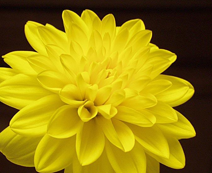 10 Charming Yellow Flowers for Weddings – BestBride101
